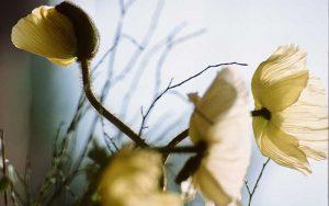 Blume_klein