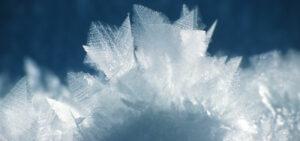 Blume gefroren